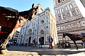 Horse carriage at Duomo with Campanile, Florence, Toscana, Italy
