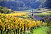Autumn wine fields and church at Altvogtsburg am Kaiserstuhl near Freiburg, Baden-Württemberg, Germany