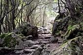Stone steps at Sentier de la Spilonca near Ota in the highlands between Evisa and Porto, western Corsica, France