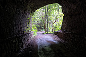 View from the tunnel on a hiking trail in the laurel forest of Los Tilos, UNESCO biosphere reserve, La Palma, Canary Islands, Spain, Europe