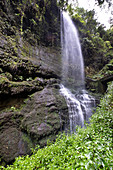 View of the Cascada de los Tilos, waterfall in the gorge from the laurel forest, Barranco del Agua, UNESCO Biosphere Reserve, La Palma, Canary Islands, Spain, Europe