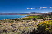 East bank of Mono Lake in summer, California, USA