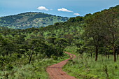 Dirt road through lush grasslands with trees, Akagera National Park, Eastern Province, Rwanda, Africa