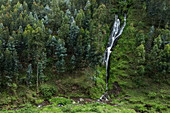 Waterfall and trees on hillside, near Musanze, Northern Province, Rwanda, Africa