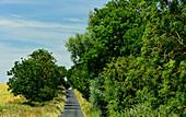 Ein einsamer Weg zwischen den Feldern bei Branston, Lincolnshire, England
