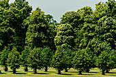 Delightful old trees on a summer day in a park, Lincolnshire, England