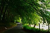 Haunted avenue in a wooded area near Slane, County Meath, Ireland