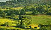 Hügellandschaft mit grünen Feldern und Wald bei Rhydlanfair, Wales, England