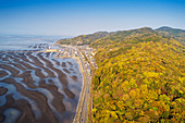 Amakusa forest and low tide beach, Kumamoto Prefecture, Kyushu, Japan, Asia
