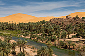 View over the Oasis of Taghit, western Algeria, North Africa, Africa