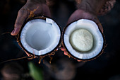 """High angle close up of hand holding young coconut with a """"seed"""" inside."""