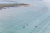 France, Vendee, La Faute sur Mer, mussel boats in a mussel poles fields off la Pointe de l'Aiguillon (aerial view)