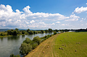 View over the Danube at Wörth, Danube, Bavaria, Germany