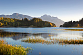 Autumn at Forggensee, view of Tegelberg and Säuling, Allgäu, Bavaria, Germany