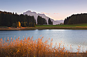Autumn at Forggensee, view to Säuling, Allgäu, Bavaria, Germany