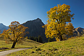 Sycamore maples at the Schwarzenberghütte in the Hintersteiner Tal near Bad Hindelang, view towards the gable, Allgäu, Bavaria, Germany