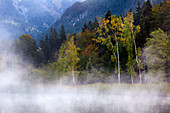Fog at the moor pond near Oberstdorf, Allgäu, Bavaria, Germany