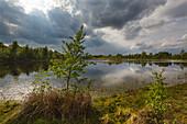 Bog landscape in Emsland, Lower Saxony, Germany