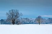 Winter landscape, Münsterland, North Rhine-Westphalia, Germany