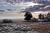 Hoar frost, Oderbruch, Brandenburg, Germany