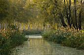 Kleiner Kanal am Spreewald, Brandenburg, Deutschland