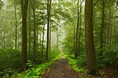 Fog, mixed forest, Taunus, Hessen, Germany