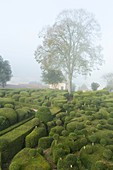 France, Dordogne, Perigord Noir, Dordogne Valley, Vezac, Marqueyssac castle, topiary garden designed by one of Le Notre student
