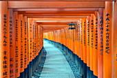 Torii gate at Fushimi Inari Jinja, Shinto shrine, UNESCO World Heritage Site, Kyoto, Honshu, Japan, Asia