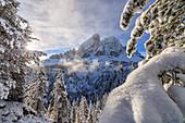 Die Sonne beleuchtet die schneebedeckten Bäume und Sass De Putia im Hintergrund, Passo Delle Erbe, Funes Tal, Südtirol, Italien, Europa