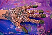 Hand decorated with design in henna, Rajasthan, India *** Local Caption ***