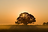 Sonnenaufgang, Busanga Plains, Kafue National Park, Sambia, Afrika