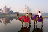 Mann und Junge reiten auf Kamelen im Yamuna-Fluss vor dem Taj Mahal, UNESCO-Weltkulturerbe, Agra, Uttar Pradesh, Indien, Asien