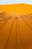 Camel caravan shadows, Erg Chebbi Desert, Sahara Desert near Merzouga, Morocco, North Africa, Africa