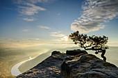 Sonnenaufgang überm Elbtal mit Kiefer im Vordergrund, vom Lilienstein, Elbsandsteingebirge, Nationalpark Sächsische Schweiz, Sächsische Schweiz, Sachsen, Deutschland