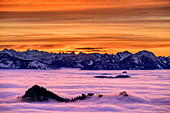 Summit of Heuberg rise out of fog, Bavarian Alps and Karwendel in the background, Hochries, Chiemgau Alps, Chiemgau, Upper Bavaria, Bavaria, Germany