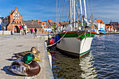 Alter Hafen (old port) in Wismar, on the left Wassertor (water tower),, Wismar stadt, Mecklenburg–Vorpommern, Germany.