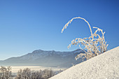 View of the Herzogstand in winter, Großweil, Upper Bavaria, Bavaria, southern Germany, Germany, Europe