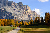 The Armentara meadows under the Kreuzkofel in the South Tyrolean Dolomites, UNESCO World Natural Heritage, Gadertal, Italy