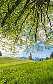 Linden tree in St. Katrein, Avelengo, South Tyrol, Italy