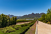 Cavalli Wine Estate, Stellenboch, Cape Winelands, South Africa, Africa