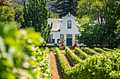 Groot Constantia Winery, Constantia, Cape Town, South Africa, Africa