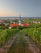 Blick auf Gumpoldskirchen,  Kirche St. Michael, Thermenregion, Niederösterreich, Österreich
