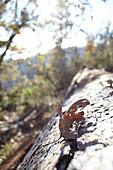Autumn backlit in Yosemite Park. California, United States.