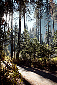 Hiking trail in Yosemite Park. California, United States.