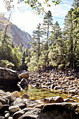 Calm Merced River in Yosemite Park. California, United States.
