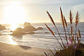 Grasses at sunset on Big Sur beach. California, United States