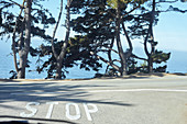 Traffic stop in front of a few trees and an abyss by the sea. Big Sur, California, USA.