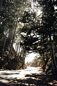 Road turn by car in forested terrain. Big Sur, California, USA