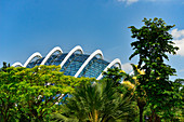 Exterior view of Gardens by the Bay, with tropical vegetation, Singapore