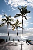 Palm trees on the promenade of Puerto Naos, La Palma, Canary Islands, Spain, Europe